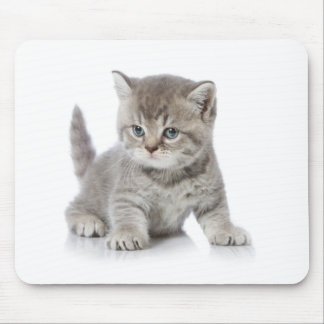 Miscellaneous - Lovely Kittens Two Mouse Pad