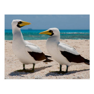 Miscellaneous - Masked Gannet & The Beach Pattern Postcard