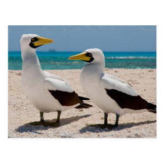 Miscellaneous - Masked Gannet & The Beach Pattern Postcard
