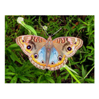 Miscellaneous - Multicolored Butterfly Postcard