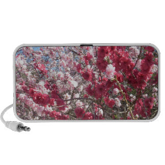 Miscellaneous - Peach Trees Blossom Pattern