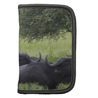 Miscellaneous - Resting African Buffalo Pattern