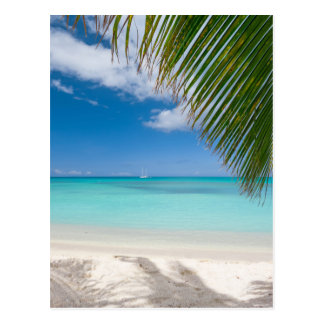 Miscellaneous - Tropical Beach & Palm Trees Five Postcard