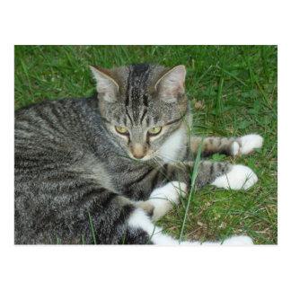 Mischief The Cat Postcard