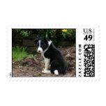 Mischievous Pup Postage Stamps