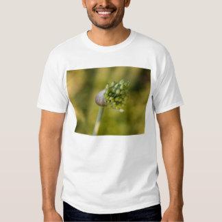misdirection shirt