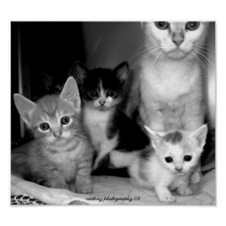 Misfit family of cats poster