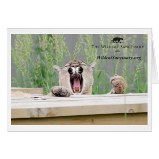Misha - Cougar Greeting Card
