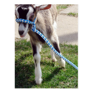 Misha la cabra postales