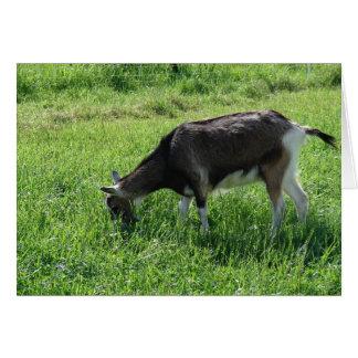 Misha la cabra tarjeta de felicitación