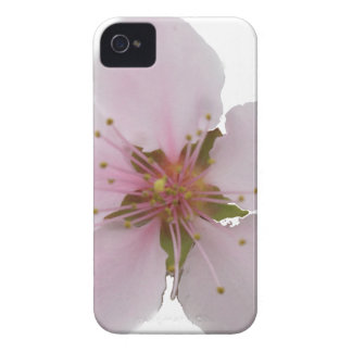 Miso Yummy Cherry Blossoms iPhone Case