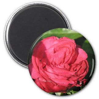 Miss All-American Beauty Hybrid Tea Rose 097 Magnet