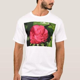 Miss All-American Beauty Hybrid Tea Rose 097 T-Shirt