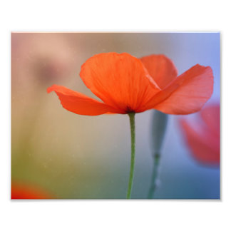Miss Poppy Photo Print