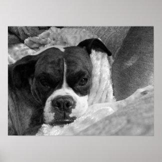 Miss Rubenstein: Boxer Dog Print