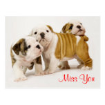 Miss You Bulldog Puppy Dogs Greeting Postcard