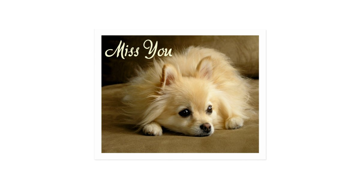Miss You Pomeranian Puppy Dog Greeting Postcard Zazzle