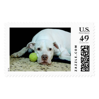 Miss you sad puppy with toy ball - cute dog postage