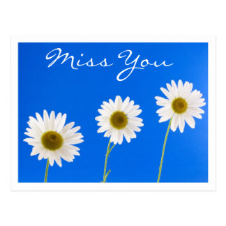 Miss You White Daisy Floral Greeting Postcard