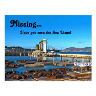 Missing...Have you seen the Sea Lions? Postcard
