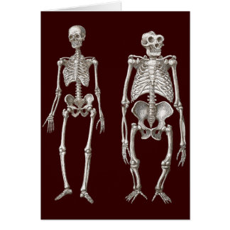 Missing Link - Skeletons of Man and Ape Greeting Card