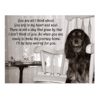 Missing You: A Cavalier KIng Charles Spaniel Card Postcard