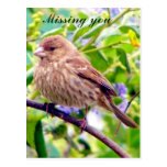 Missing you/ Any Occasion_ Postcard Post Cards