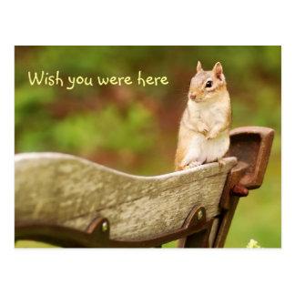 Missing You Chipmunk Postcard