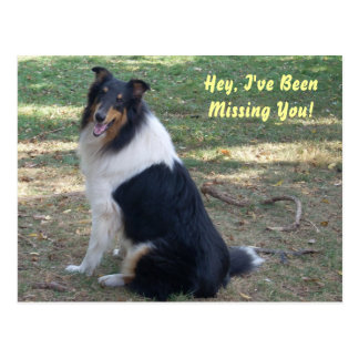 Missing You- Collie! Postcards