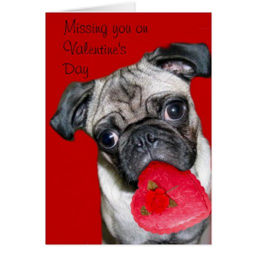 Missing you on Valentine's Day pug greeting card