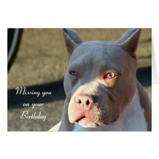 Missing you on your birthday Staffordshire Terrier Card