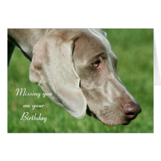 Missing you on your Birthday Weimaraner Card