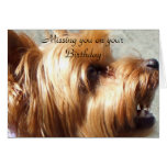 Missing you on your birthday Yorkie Terrier Card