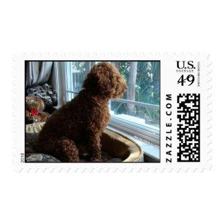 Missing You - Poodle - Postage