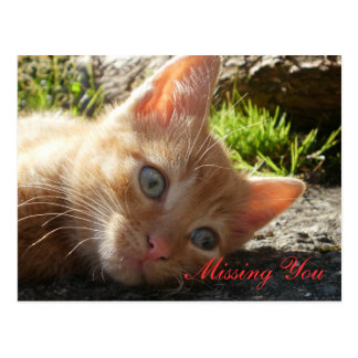 Missing You; Sad Kitten Postcard