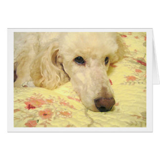 Missing You Sad White Poodle Card