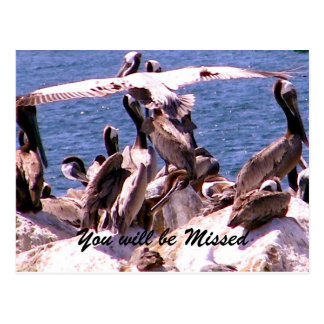 Missing You/Thank You_ Postcard