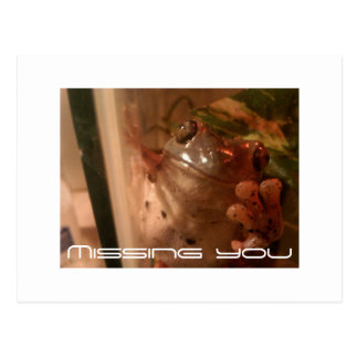 Missing you, wish you were here frog post card