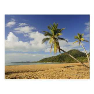 Mission Beach Postcard