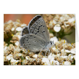 Mission Blue Butterfly Greeting Card