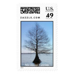 Mississippi Cypress Postage Stamp