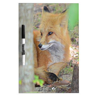 Mississippi Red Fox Dry-Erase Whiteboard