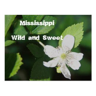 Mississippi - salvaje y dulce tarjetas postales