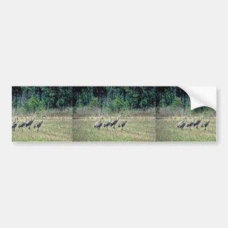 Mississippi Sandhill Cranes Car Bumper Sticker