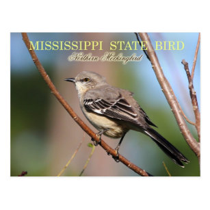 Mississippi State Bird Gifts On Zazzle