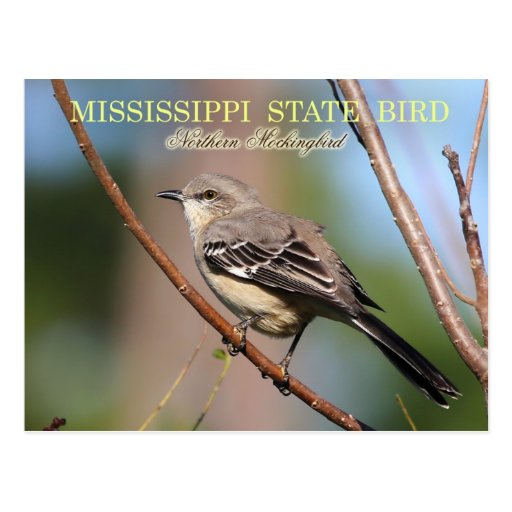 Woodguide: Mockingbird bird house plans