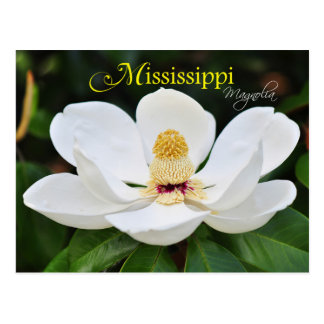 Mississippi State Flower: Magnolia Postcard