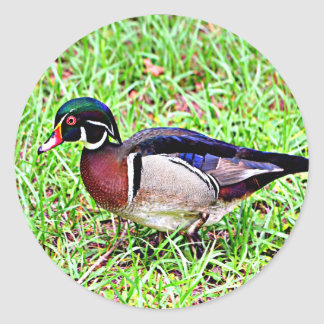 Mississippi Wood Duck Classic Round Sticker