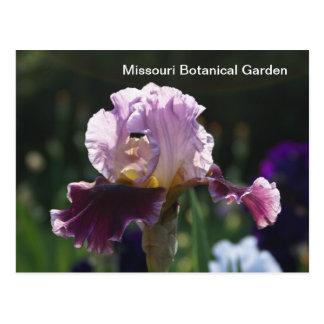 Missouri Botanical Garden-Iris Postcard