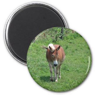 MIssouri Mule 2 Inch Round Magnet